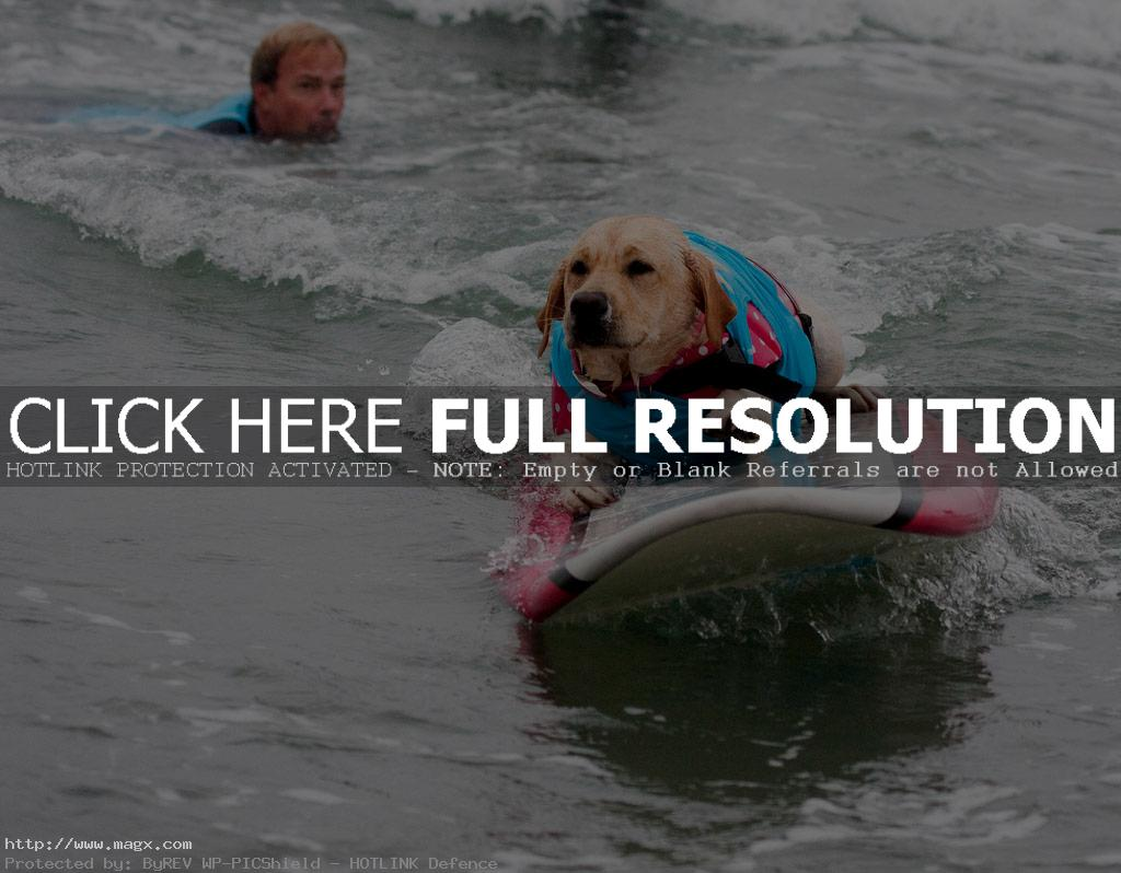 dog surf6 Just a Little Different Surfing