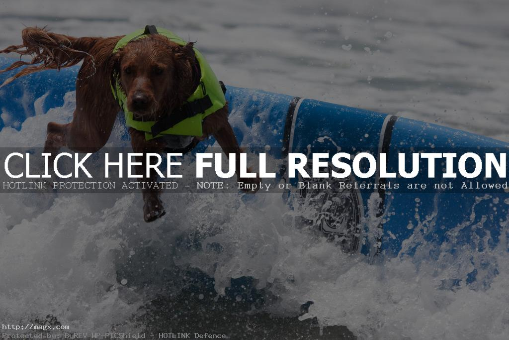 dog surf7 Just a Little Different Surfing