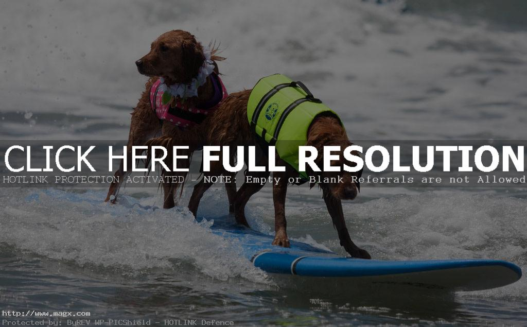 dog surf8 Just a Little Different Surfing