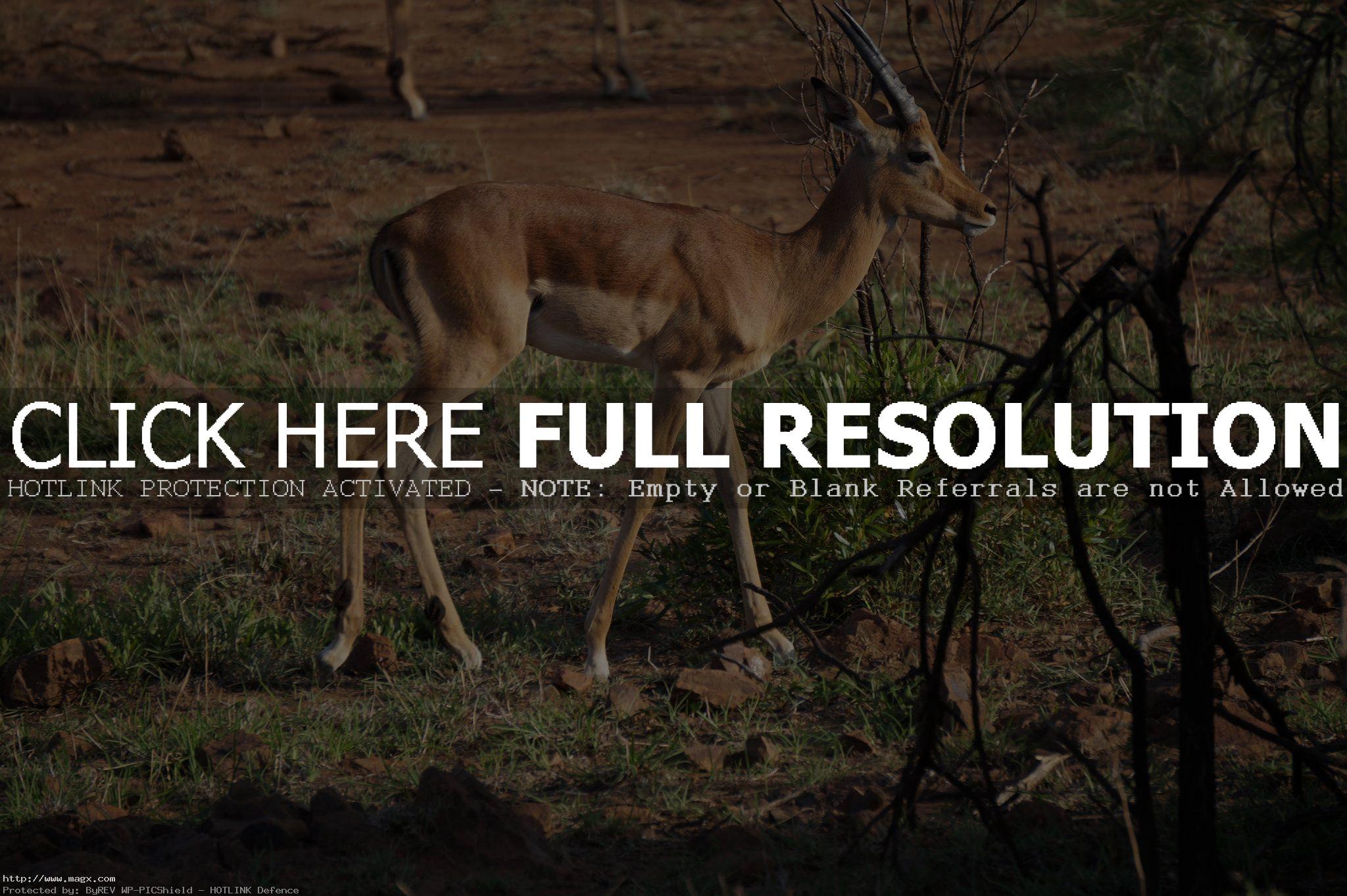 pilanesberg national park10 Discover Pilanesberg National Park
