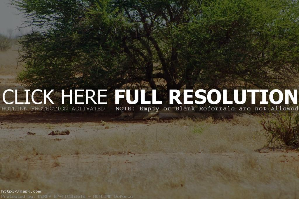 tsavo16 Tsavo East National Park in Eastern Kenya