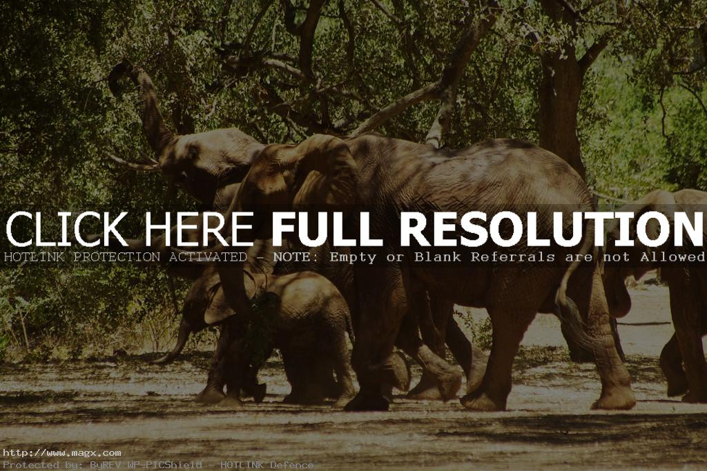 tsavo8 Tsavo East National Park in Eastern Kenya