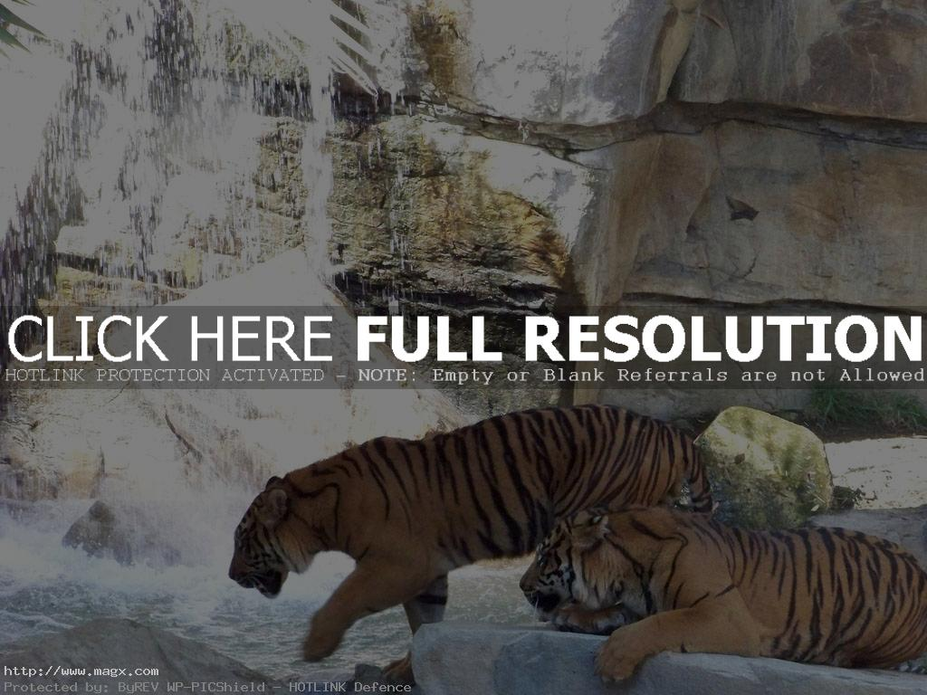 los angeles zoo14 Best Things to Do in Los Angeles ( L.A. Zoo )