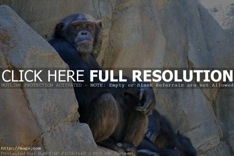 los angeles zoo15 Best Things to Do in Los Angeles ( L.A. Zoo )