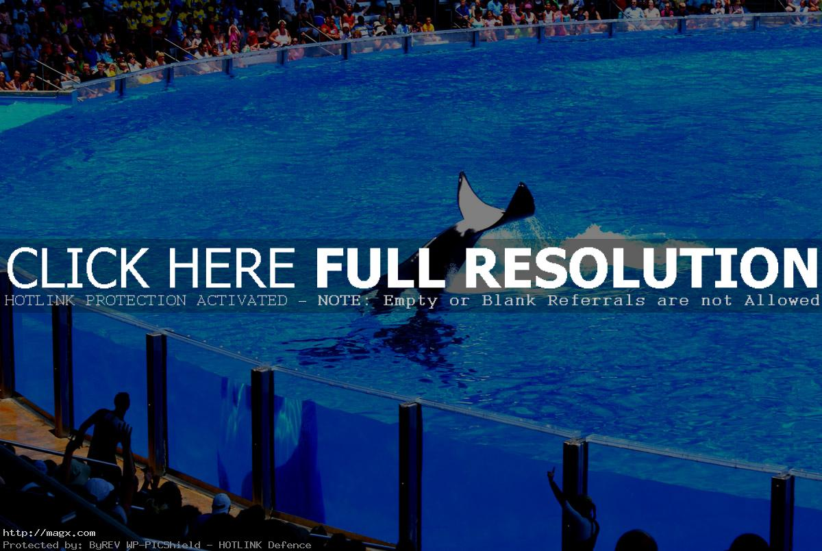seaworld orlando14 Live Entertainment at SeaWorld Orlando