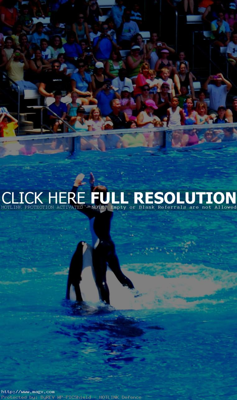 seaworld orlando9 Live Entertainment at SeaWorld Orlando