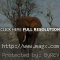 Tsavo East National Park in East...