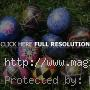 Best Easter Egg Ideas