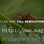 Dragonfly in Macro Photography