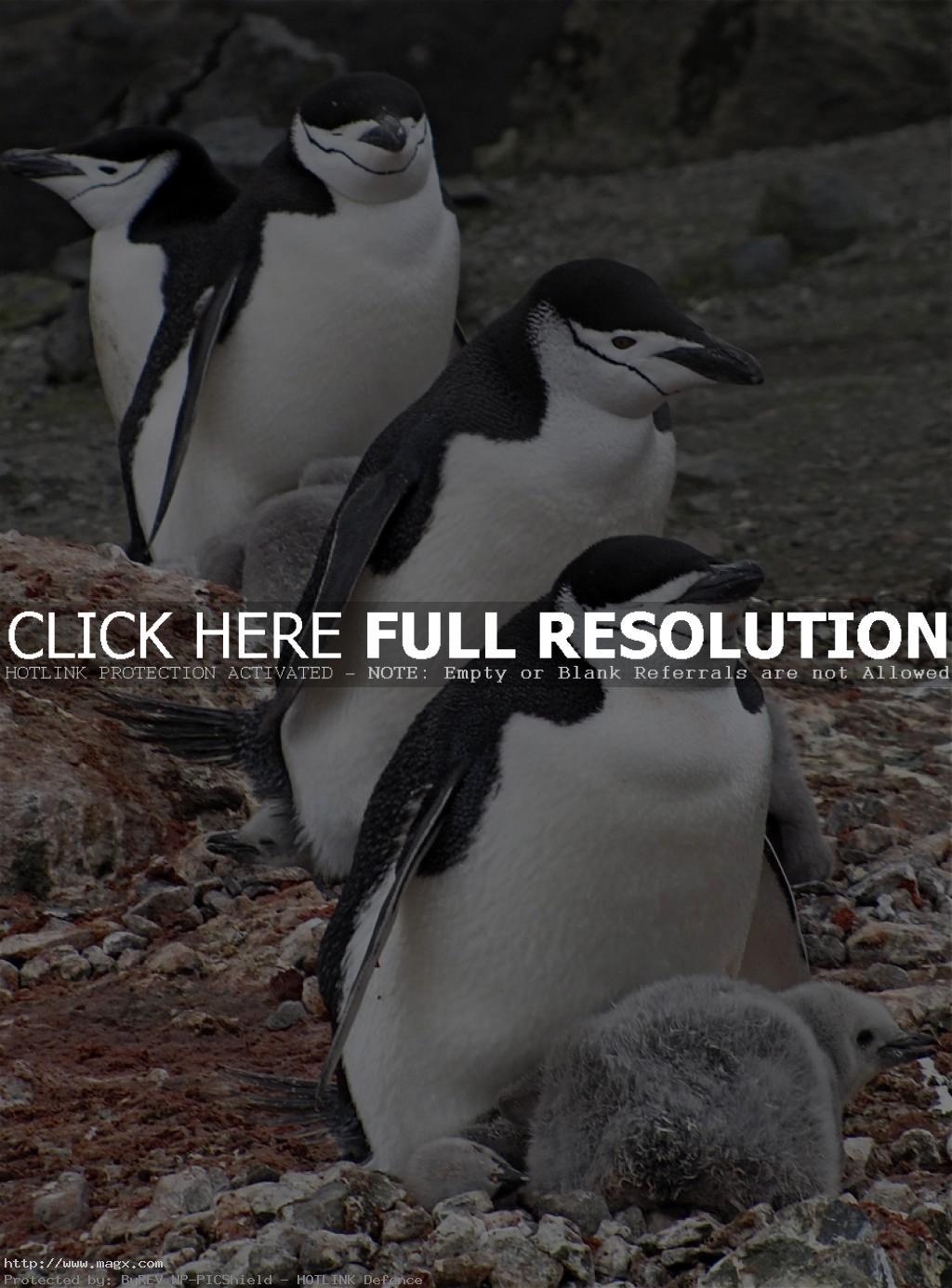 antarctica8 Antarcticas Peculiar Beauty