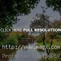 Autumn in Liverpool Parks by Bob...